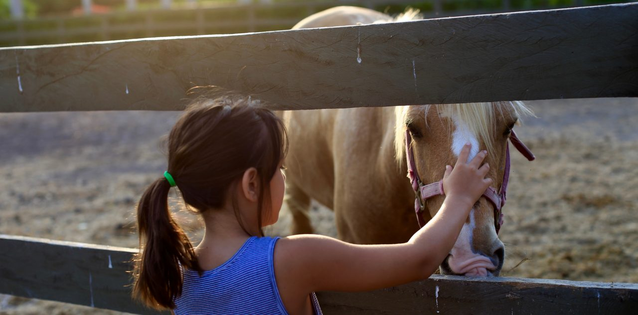 Attractive Nuisance: Rear View Of Girl Petting Horse In a Fenced in Pen